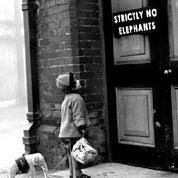 Strictly No Elephants Profile