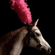 Show Pony Profile