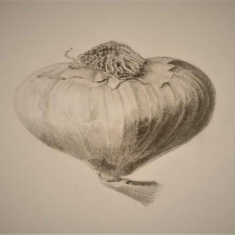Graphite Study Sketch of Garlic Bulb