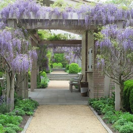 A wisteria-draped pergola and gravel path leads to the entry of home and garden.