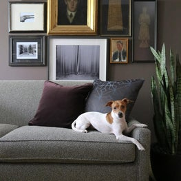 West Village Pied-à-terre, Dogs + Design, Gallery Wall, Houseplant/ Snake Plant