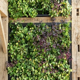 Delaware River Home, New Hope Living Wall