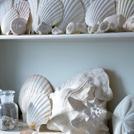 A shell collection on a vintage shelf, subtle color, beautiful texture