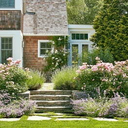 Beds of Catmint, Blushing Knockout Roses, and Lavender.