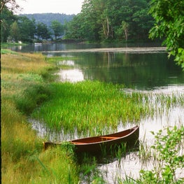 Grass Wildflower Meadow Pond Edge