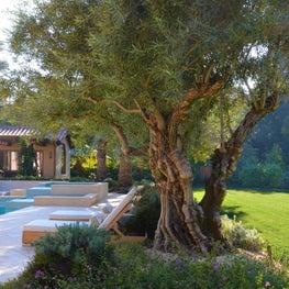 Olive Tree & Spa