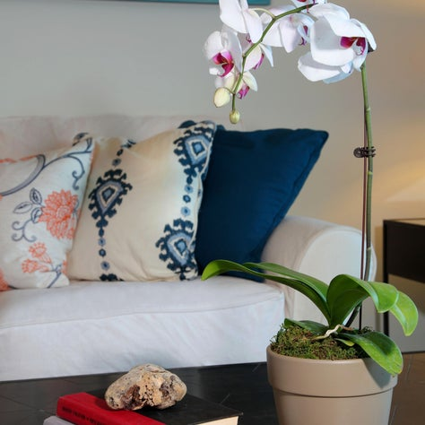 A collection of embroidered pillows adds a splash of color.