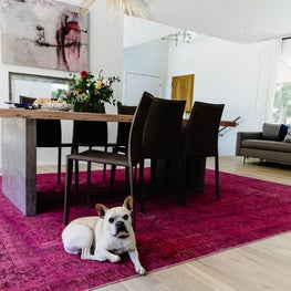 A Dog and An Overdyed Pink Rug