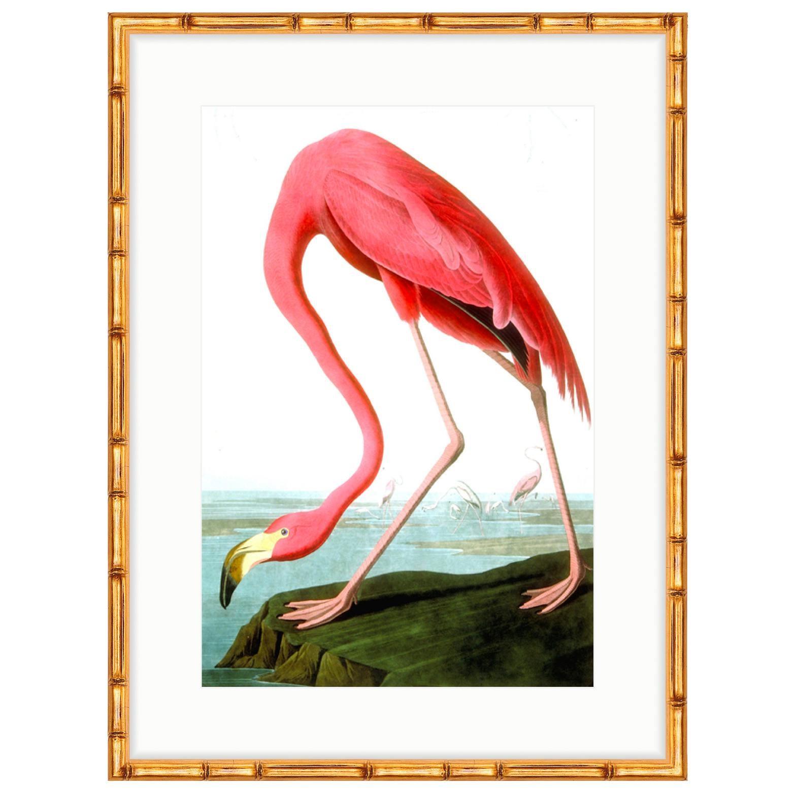 Soicher Marin Audubon Flamingo Print in Gold Bamboo Frame | Chairish