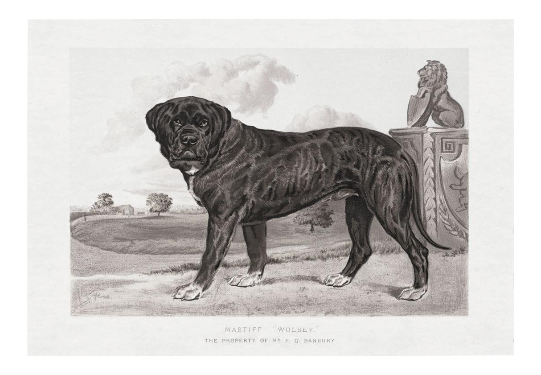Cassell Dogs Mastiff Unframed Artwork Chairish