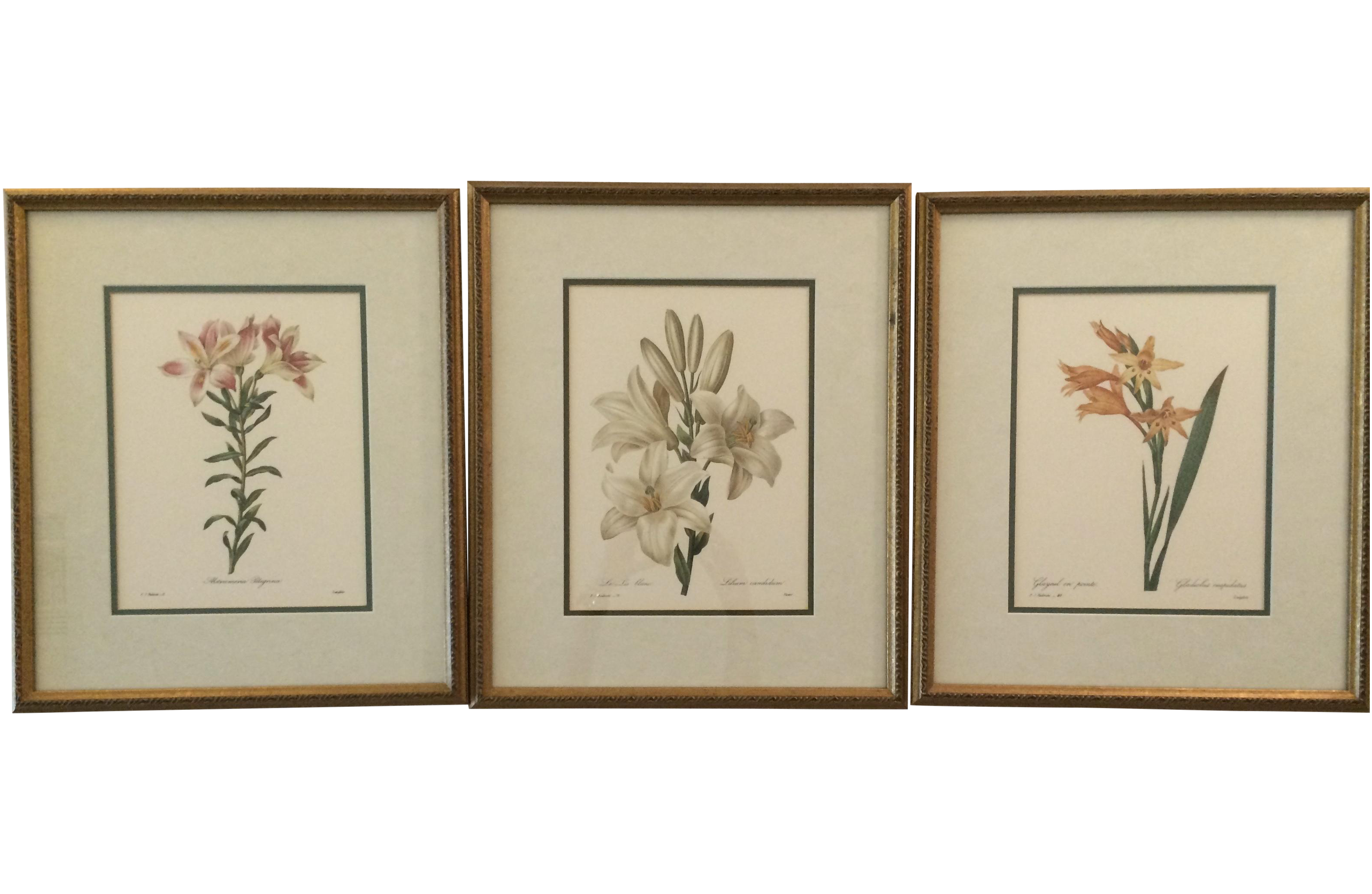 French vintage framed botanical prints set of 3 chairish