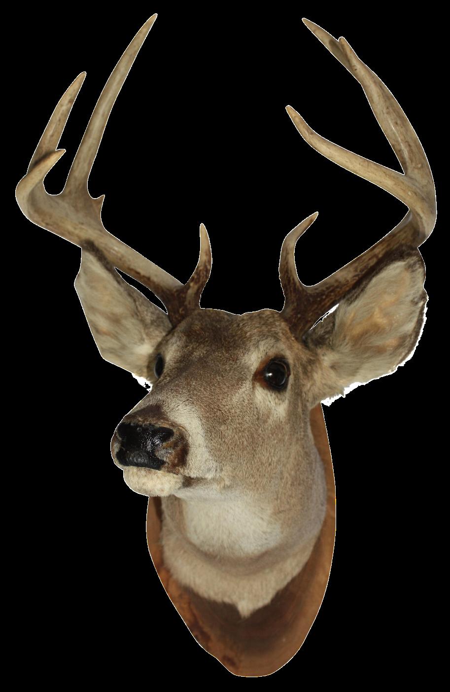 Vintage White Tail Deer Mount Chairish