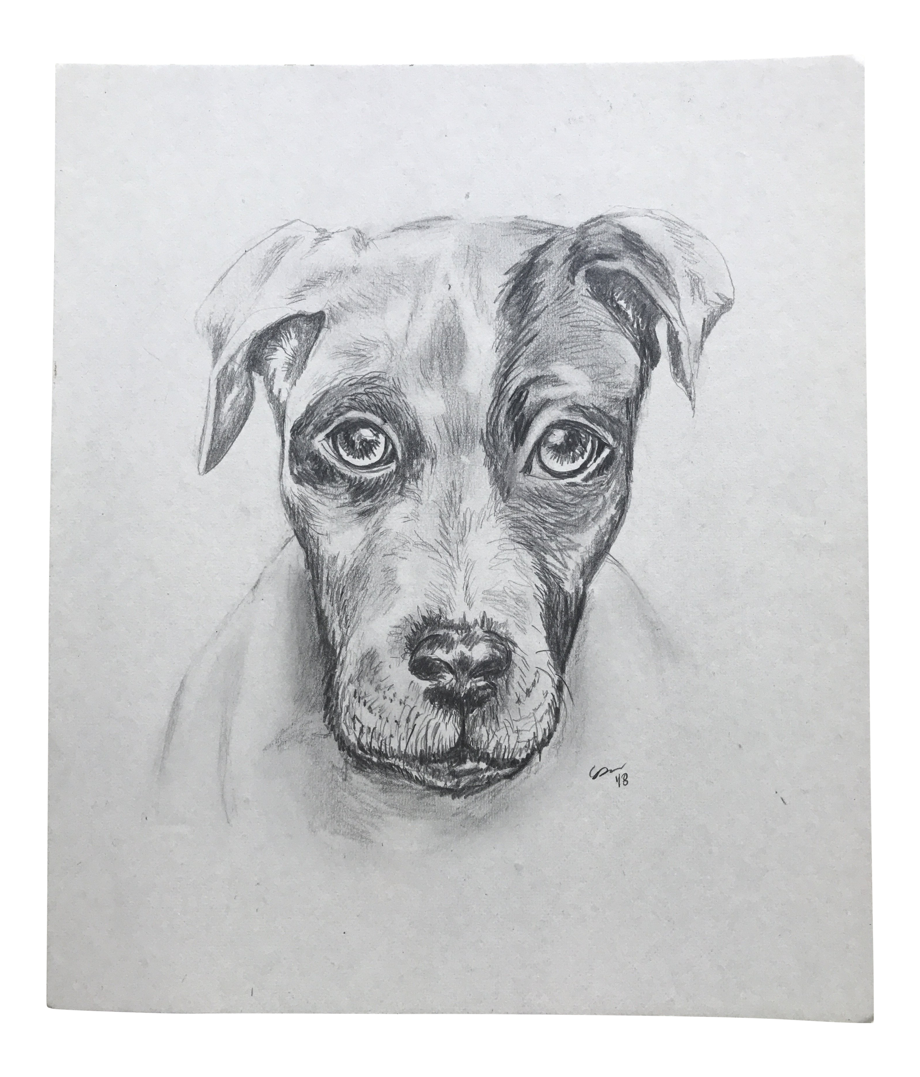 Original Pencil Drawing Caught By Christy Almond Chairish