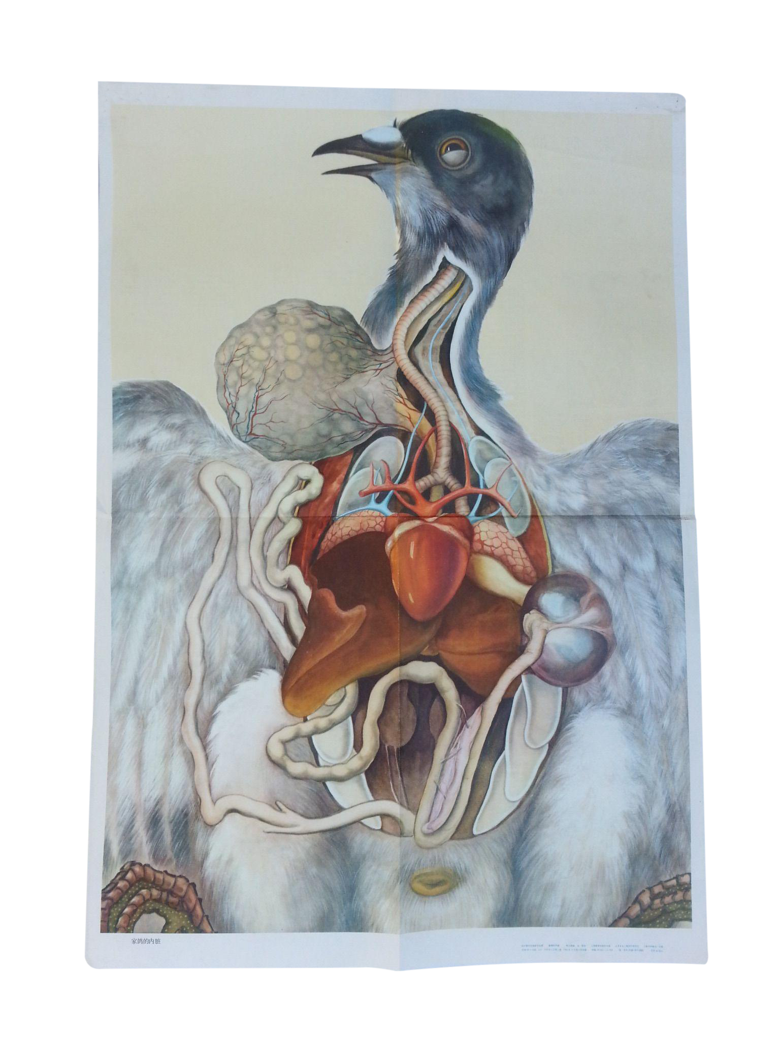 Vintage Anatomy Science Poster - Bird | Chairish