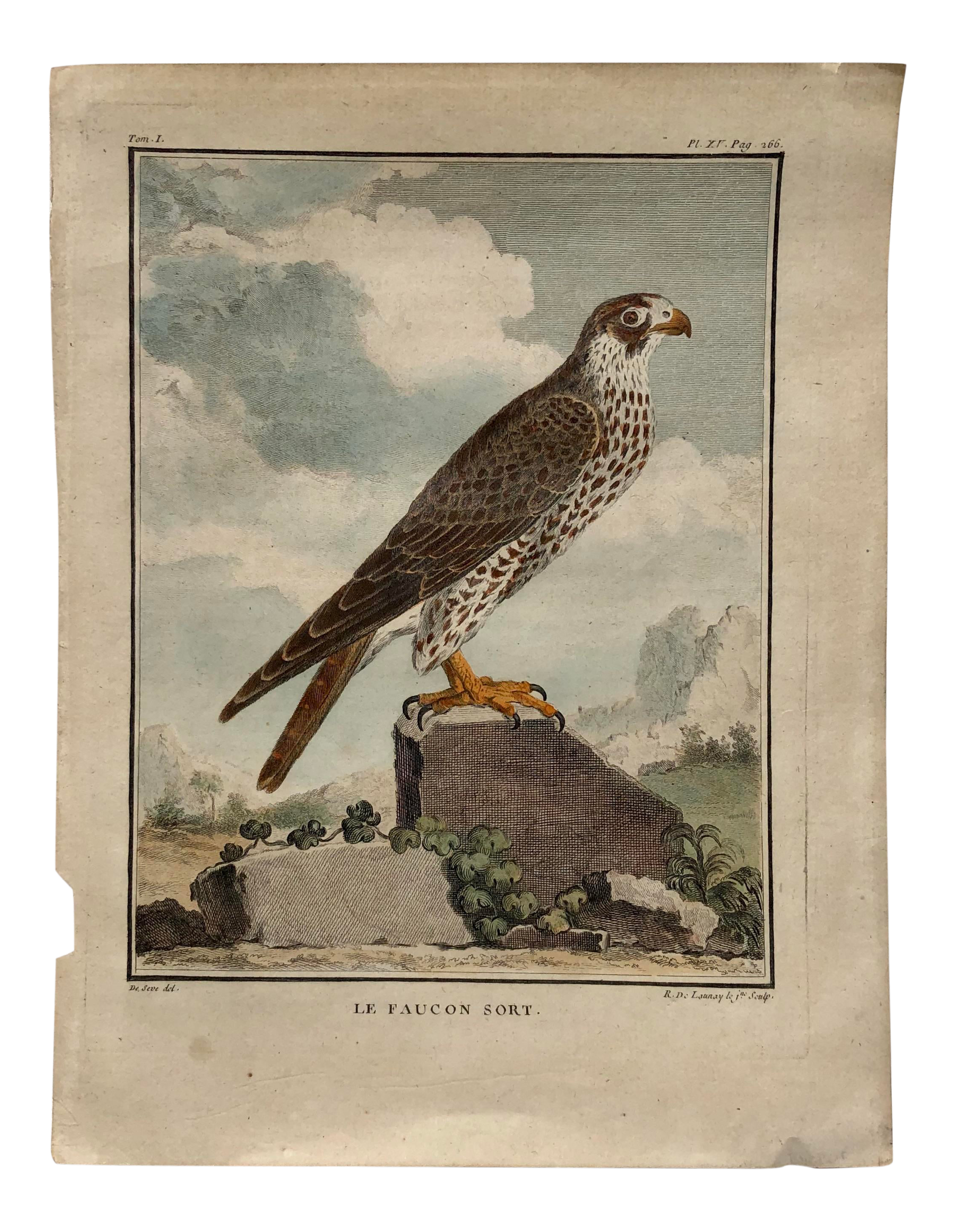 18th Century French Bird Engraving Signed By Jacques De Seve Featuring A Falcon Chairish