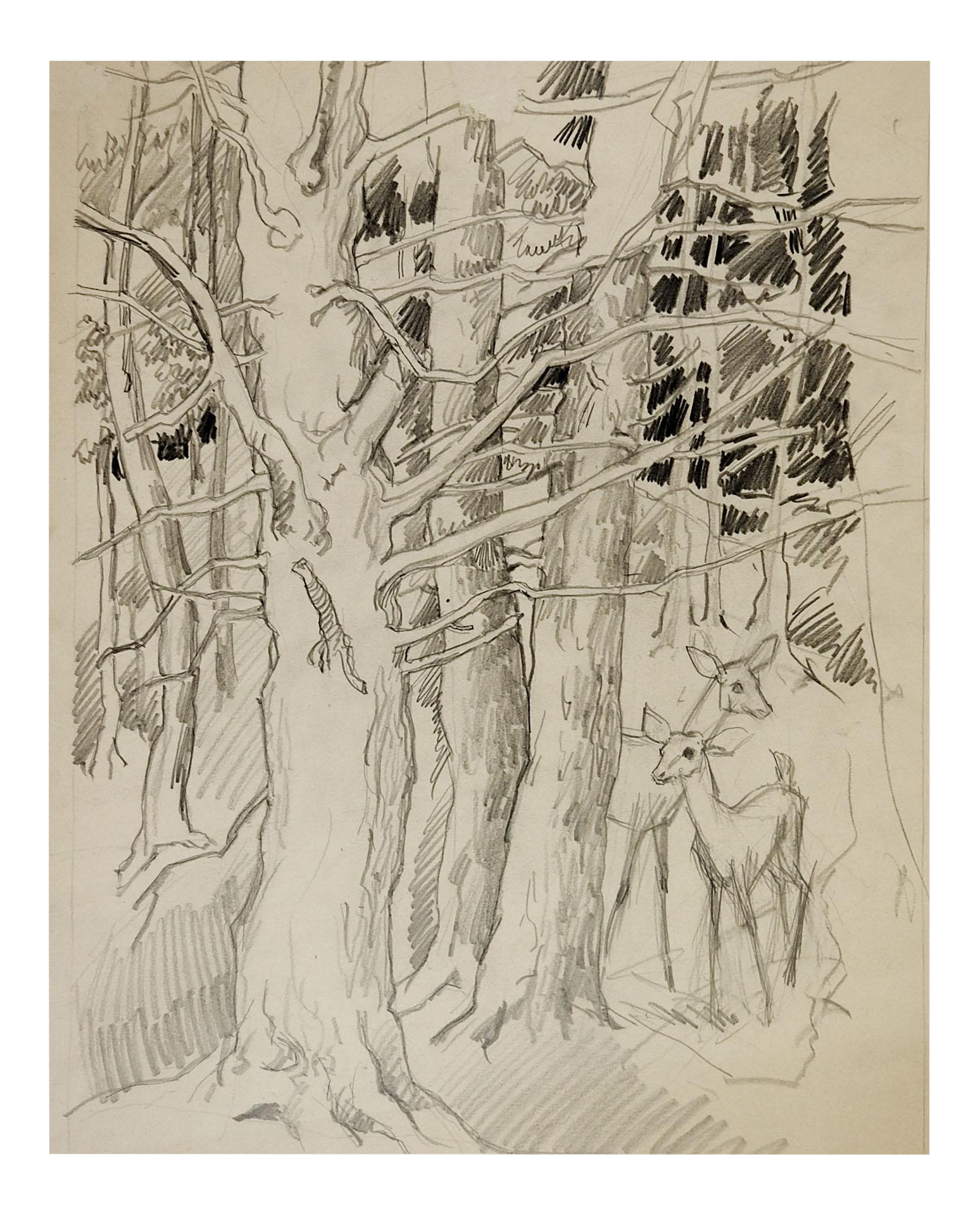 George Baer Pencil Study Of Deer In Forest Chairish