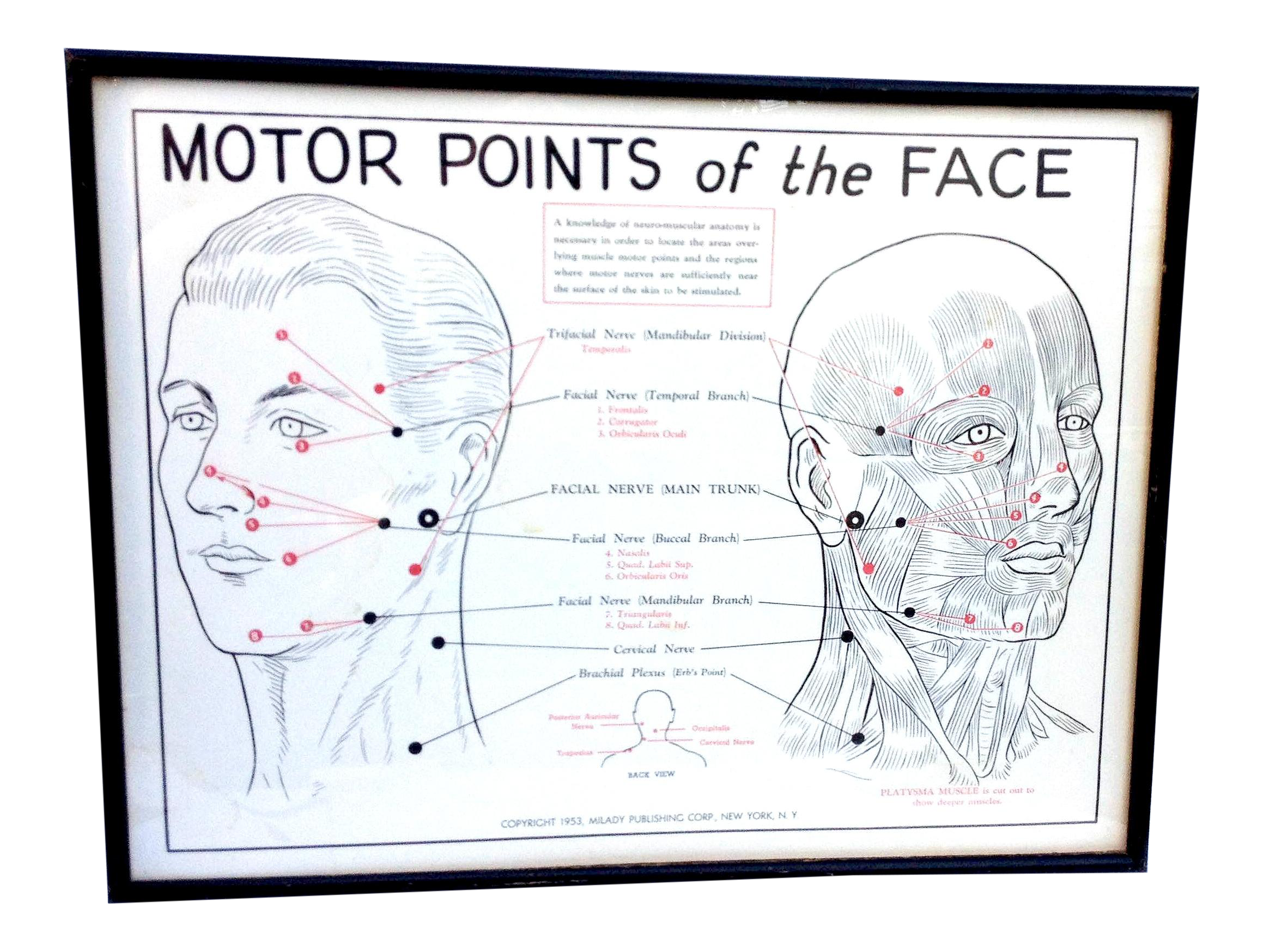 1953 motor points of the face diagram chairish pooptronica Image collections