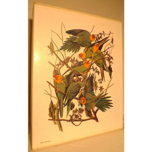 1990s Baby Elephant Illustrated Folio Book, Audubon's Birds of America For Sale - Image 4 of 12