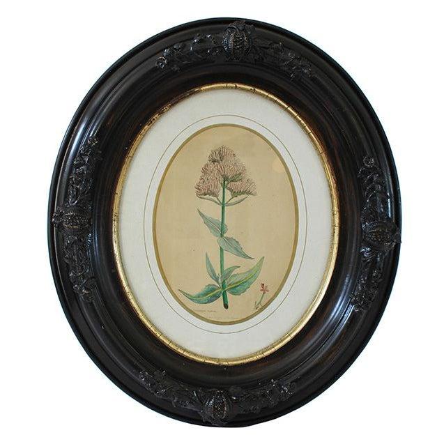 Civil War-Era Botanical Prints - Set of 4 - Image 4 of 7