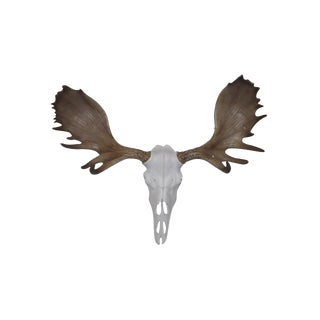 Wall Charmers Alberta Faux White + Natural Rustic Antlers Resin Moose Head Skull