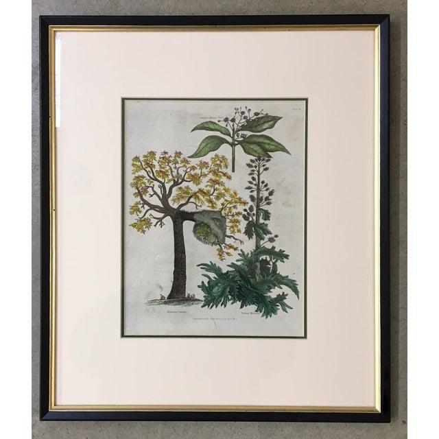 English Botanical Lithograph - Image 2 of 5