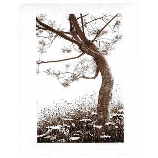 Tree and Daisies Sepia Photo by Garo For Sale