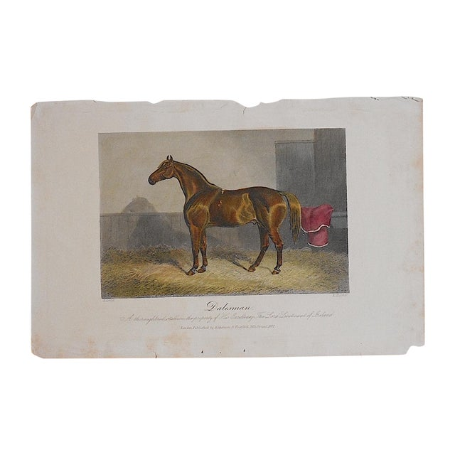 Antique Horse/Equine Engraving - Image 2 of 3