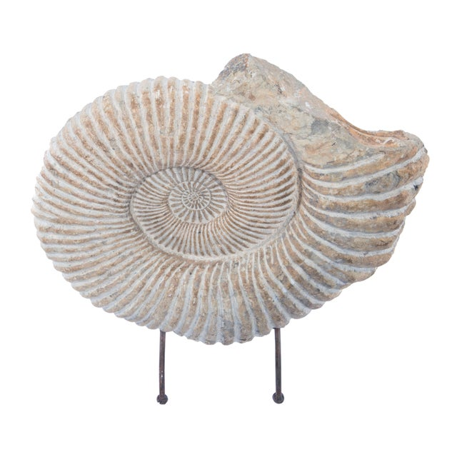 Contemporary ANCIENT AMMONITE FOSSIL STATUE For Sale - Image 3 of 10