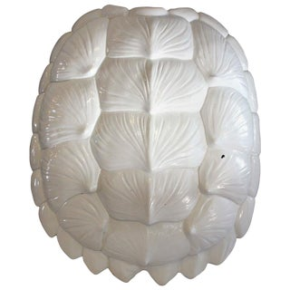 White Lacquered Tortoise Shell For Sale