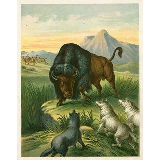 Antique North American Bison Print For Sale
