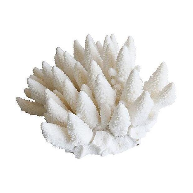 Large Natural Ocean Sea White Coral Specimen For Sale - Image 4 of 7