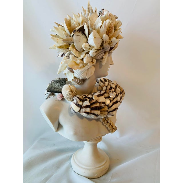 Christa's South Seashells Medium Apollo Shell-Encrusted Bust For Sale - Image 4 of 6