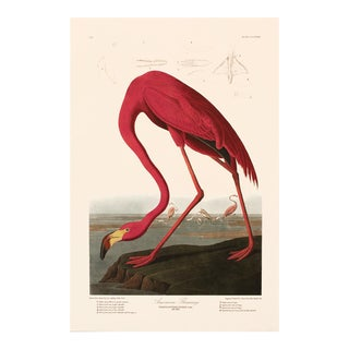 1990s American Flamingo by Audubon, Large American Classical or Chinoiserie Print For Sale