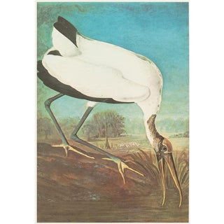 1966 Vintage Cottage Print of Wood Ibis by John James Audubon For Sale