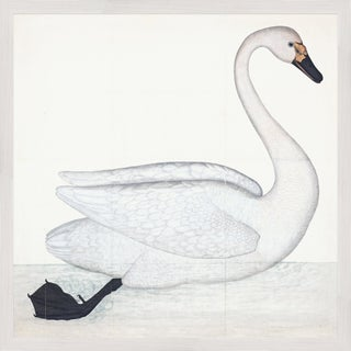 Bewick's Swan Plate 1. By Olof Rudbeck Framed in White For Sale