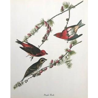 Authentic John James Audubon Vintage Purple Finch Bird & Botanical Print For Sale