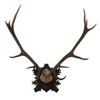 Maitland Smith Faux Taxidermy Stag Horns Mount For Sale