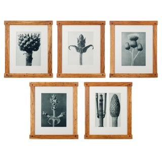 Karl Blossfeldt Photogravures in Handcrafted Wormy Oak Frames, C.1929 - Set of 5 For Sale