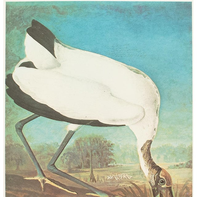 1960s 1966 Cottage Lithograph of Large Wood Ibis by John James Audubon For Sale - Image 5 of 10