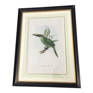 19th Century Antique Hand-Colored Toucan Lithograph by John Gould For Sale