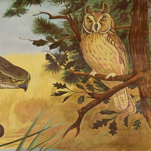 German Educational Poster of Birds of Prey - Image 2 of 4