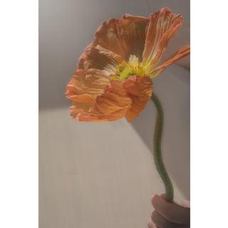 Rays: Orange Iceland Poppy III, 2020' Contemporary Photograph by Claiborne Swanson Frank, 30x40