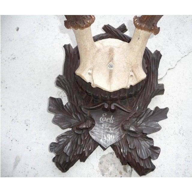 Black Forest Stately Black Forest Antler Mount on Carved Walnut Plaque For Sale - Image 3 of 4