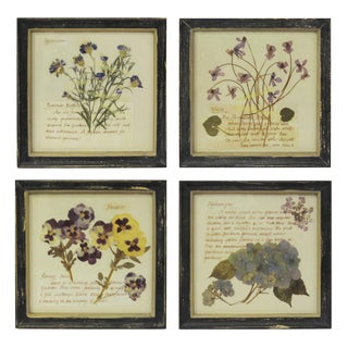 Framed Botanical Prints - Set of 4