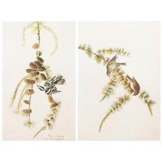 1966 Cottage Style Lithographs of Birds by John James Audubon - Set of 2