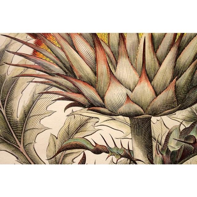 """Cinera Cum Flore"" Hand-Tinted Botanical Print - Image 6 of 8"