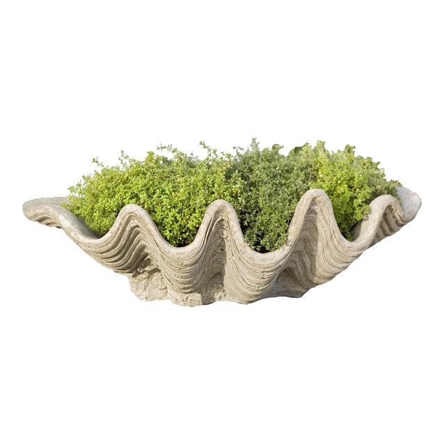 Kuri Planter For Sale