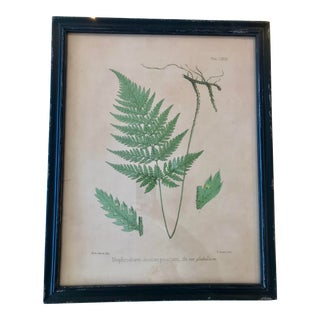 Contemporary Reproduction Print of a Fern, Framed For Sale