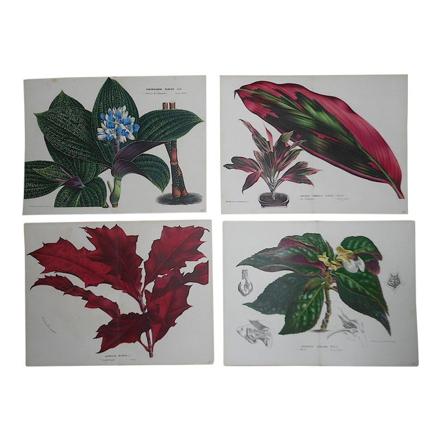 """Antique Botanical Lithographs-Flowers-Set of 4-Apprx. 10""""x13"""" For Sale"""