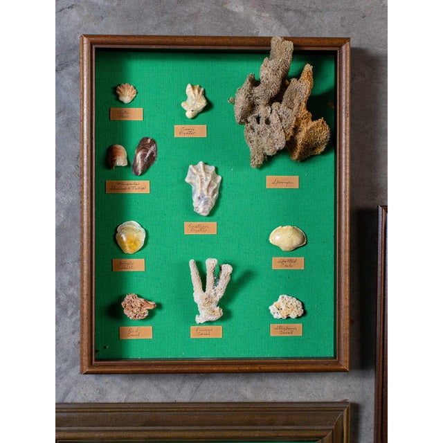 This marvelous collection of eight vintage different shadow box presentations of various marine artifacts circa 1960 has...